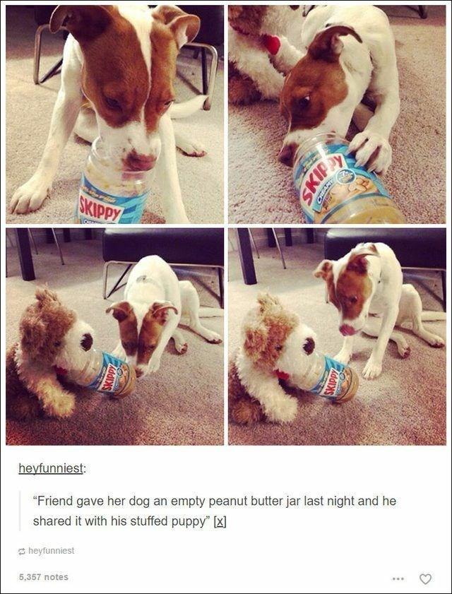 "Dog - СКIРРУ heyfunniest: ""Friend gave her dog an empty peanut butter jar last night and he shared it with his stuffed puppy"" (x) S heyfunniest 5,357 notes SKIPPY SKIP SKIPPY"