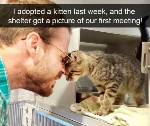 Cat - I adopted a kitten last week, and the shelter got a picture of our first meeting!