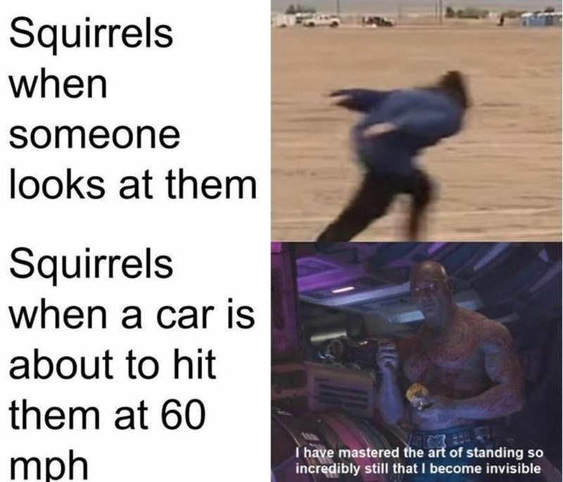 Text - Squirrels when someone looks at them Squirrels when a car is about to hit them at 60 mph I have mastered the art of standing so incredibly still that I become invisible