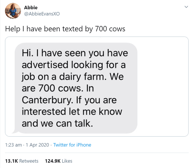 Text - Abbie @AbbieEvansXO Help I have been texted by 700 cows Hi. I have seen you have advertised looking for a job on a dairy farm. We are 700 cows. In Canterbury. If you are interested let me know and we can talk. 1:23 am · 1 Apr 2020 · Twitter for iPhone 13.1K Retweets 124.9K Likes