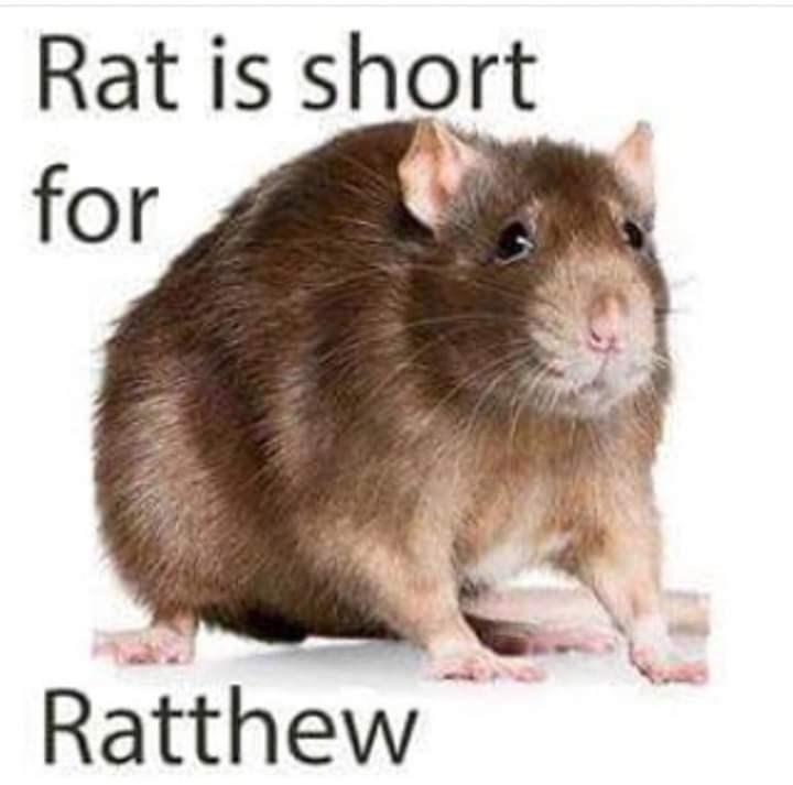 Mammal - Rat is short for Ratthew