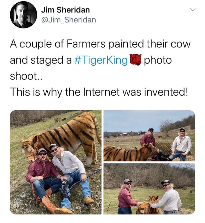 Adaptation - Jim Sheridan A @Jim_Sheridan A couple of Farmers painted their cow and staged a #TigerKingphoto shoot.. This is why the Internet was invented!