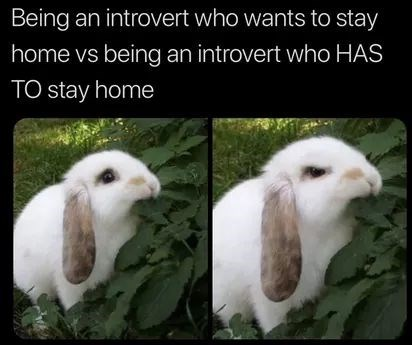 Vertebrate - Being an introvert who wants to stay home vs being an introvert who HAS TO stay home