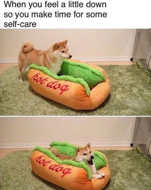 Canidae - When you feel a little down so you make time for some self-care hot dog ot dog
