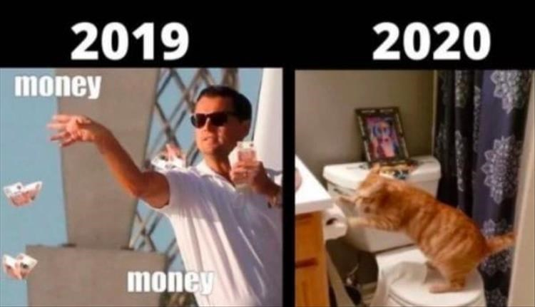 2019 the wolf of wall street leonardo dicaprio throwing money bills from a yacht 2020 cat playing with toilet paper