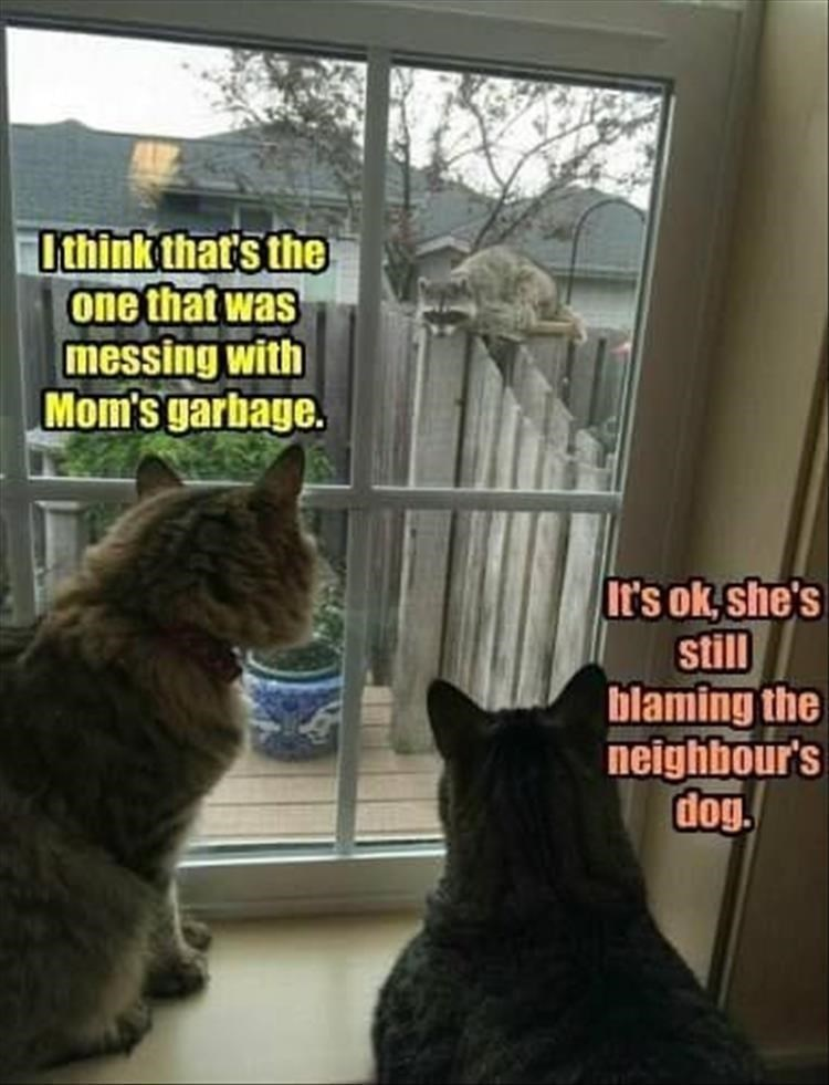 i think that's the one that was messing with mom's garbage it's ok she's still blaming the neighbors' dog two cats watching a raccoon outside