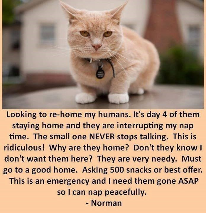 cat meme looking to re home my humans it's day 4 of them staying home and they are interrupting my nap time the small one never stops talking this is ridiculous why are they home