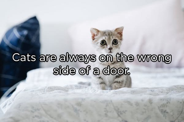 Cat - Cats are always on the wrong side of a door.