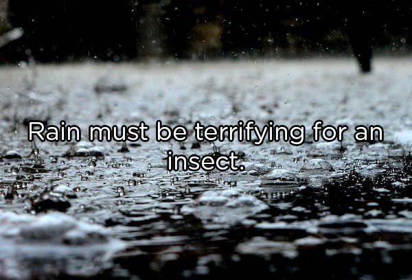 Water - Rain must be terrifying for an insect.