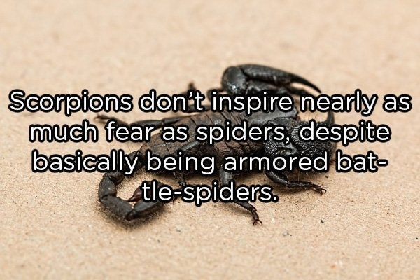 Insect - Scorpions dont inspire nearly as much fear as spiders, despite basically being armored bat- tle-spiders.