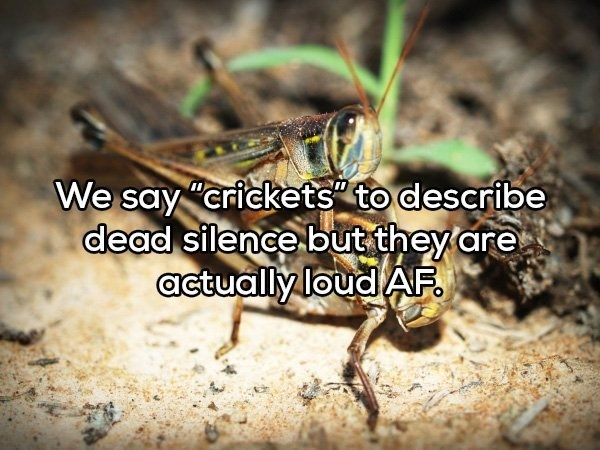 """Insect - We say """"crickets"""" to describe dead silence but they are actually loud AF."""