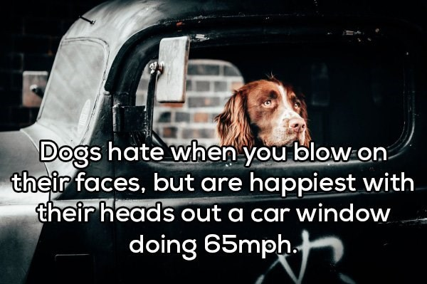 Dog - Dogs hate when you blow on their faces, but are happiest with their heads out a car window doing 65mph.