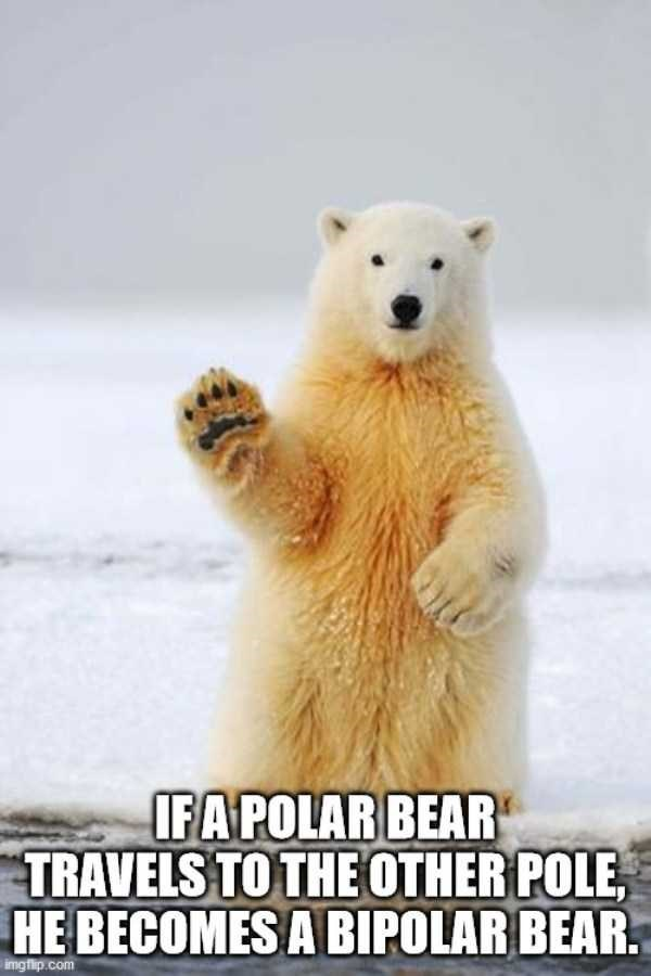 Polar bear - IFA POLAR BEAR TRAVELS TO THE OTHER POLE, HE BECOMES A BIPOLAR BEAR. imgflip.com