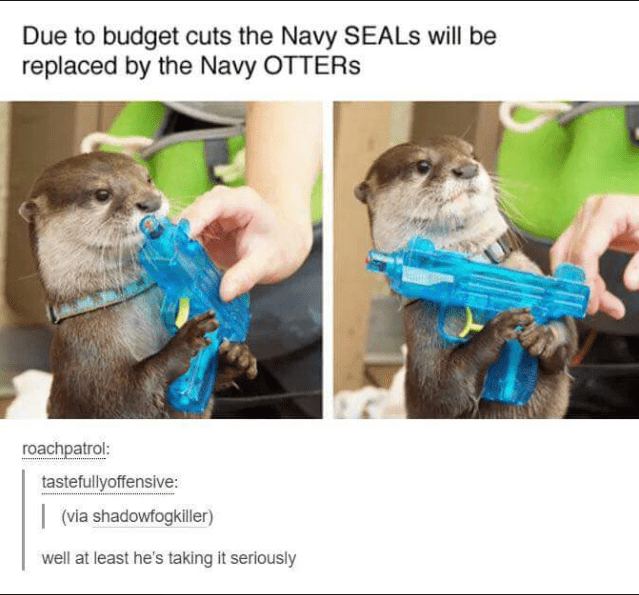 Otter - Due to budget cuts the Navy SEALS will be replaced by the Navy OTTERS roachpatrol: tastefullyoffensive: | (via shadowfogkiller) well at least he's taking it seriously