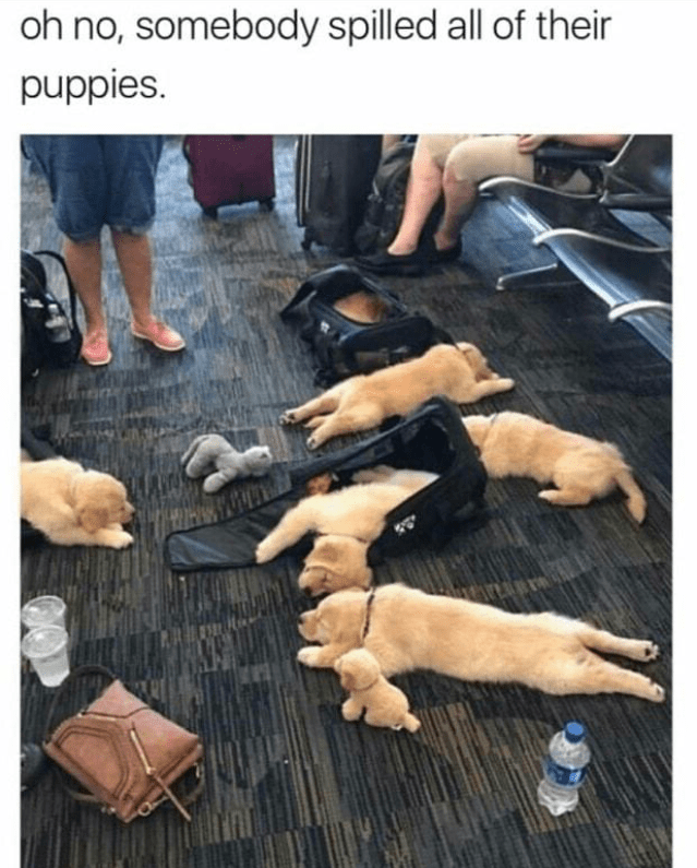 Human - oh no, somebody spilled all of their puppies.