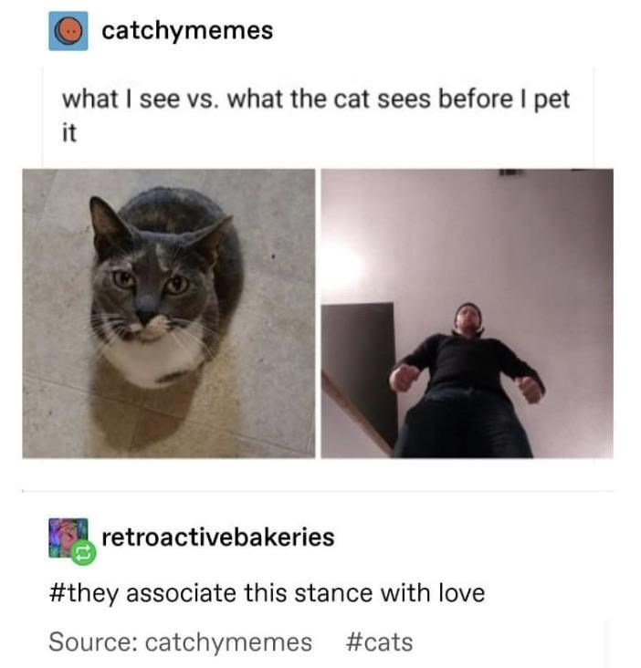 catchymemes what I see vs. what the cat sees before I pet it retroactivebakeries #they associate this stance with love Source: #cats