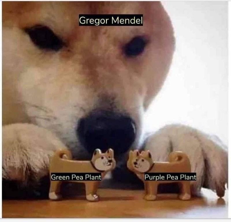 Vertebrate - Gregor Mendel Green Pea Plant Purple Pea Plant