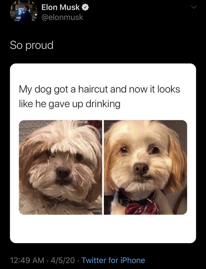 Dog - Elon Musk a @elonmusk So proud My dog got a haircut and now it looks like he gave up drinking 12:49 AM · 4/5/20 · Twitter for iPhone