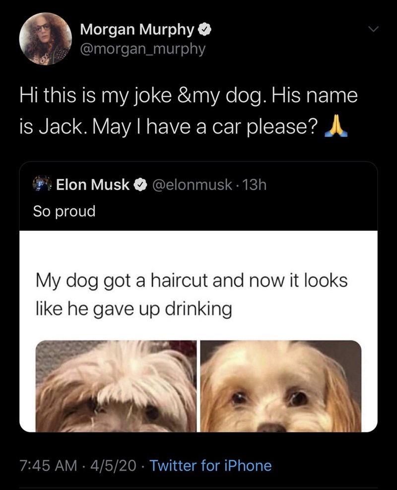 Dog breed - Morgan Murphy O @morgan_murphy Hi this is my joke &my dog. His name is Jack. May I have a car please? A Elon Musk O @elonmusk · 13h So proud My dog got a haircut and now it looks like he gave up drinking 7:45 AM · 4/5/20 · Twitter for iPhone