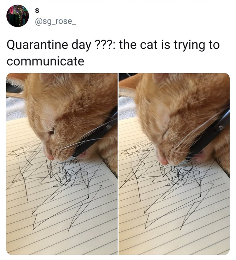 Skin - @sg_rose_ Quarantine day ???: the cat is trying to communicate