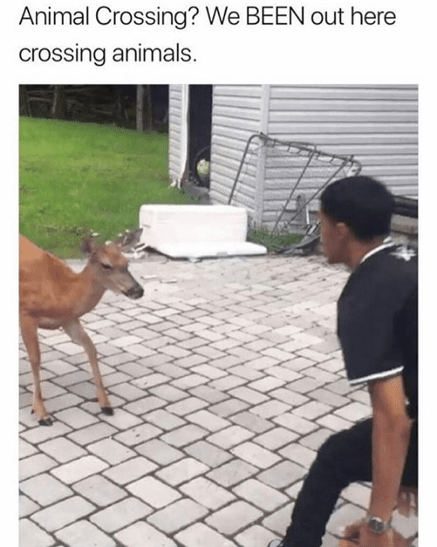 Funny meme, picture of guy about to fight a deer, animal crossing, crossing animals | Animal Crossing? We BEEN out here crossing animals.