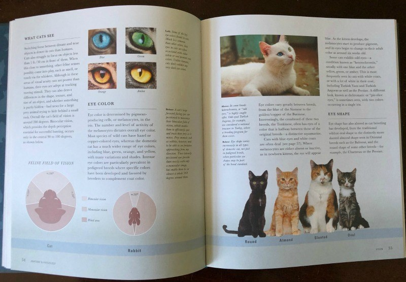 """Cat - WHAT CATS SEE Shing fic hetween dani and aear bntalr in cats thas baman Ca a strle to fos or hieo ies as c in fon of them When lee sonthing ther feine semes Nar. As the kiten developi, the melancyte startpedae piem, and its eyea begin to change to their adelt cokr at arund sa weeks old. Sme cas eibit odd eve cundrion ktaw a """"hetrecheia,"""" Gee py ce ite play, sach as unell, or via the whisken Alihough in these am f ial araits cats are poceer than hu thrir eni aer adept at tracking ing stink"""