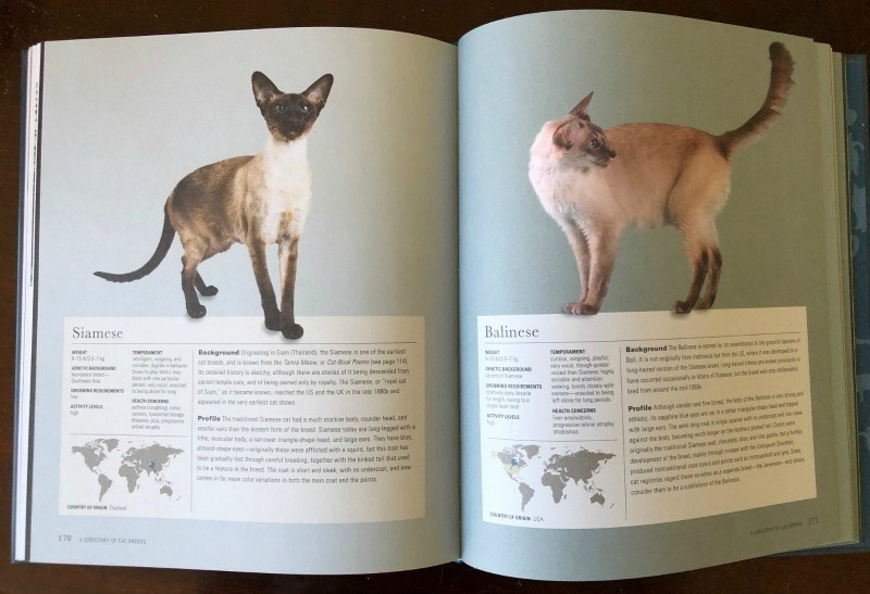 Cat - Siamese Balinese RAMNT Background Driging in Sun (thaiandi the Senee is ane of the cariost car broeds, and iskn ton the Gsu o Cat Book Poes page 114 ts detaed hatory is sty aldegh thee ane starias ut it being descwded hon deple cats nd of being ownd anly by aylty The Saness or reyal cat t Sam nbcane known eached the S and the UK in the late 1880 and Background the Balineane e e g n Batatrgly h indeia on t wt o leng haird vesn of the Sianesed Longtad e e lave omd acasieny onsSa -15as-i IMPE