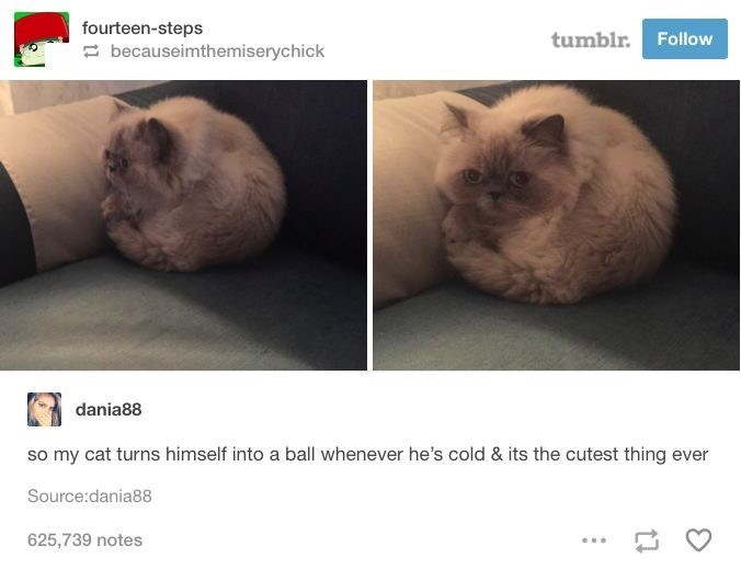 Cat - fourteen-steps tumblr. Follow 2 becauseimthemiserychick dania88 so my cat turns himself into a ball whenever he's cold & its the cutest thing ever Source:dania88 625,739 notes