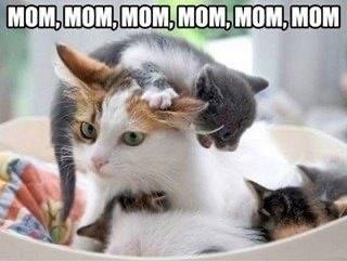 Cat - MOM, MOM, MOM, MOM, MOM, MOM