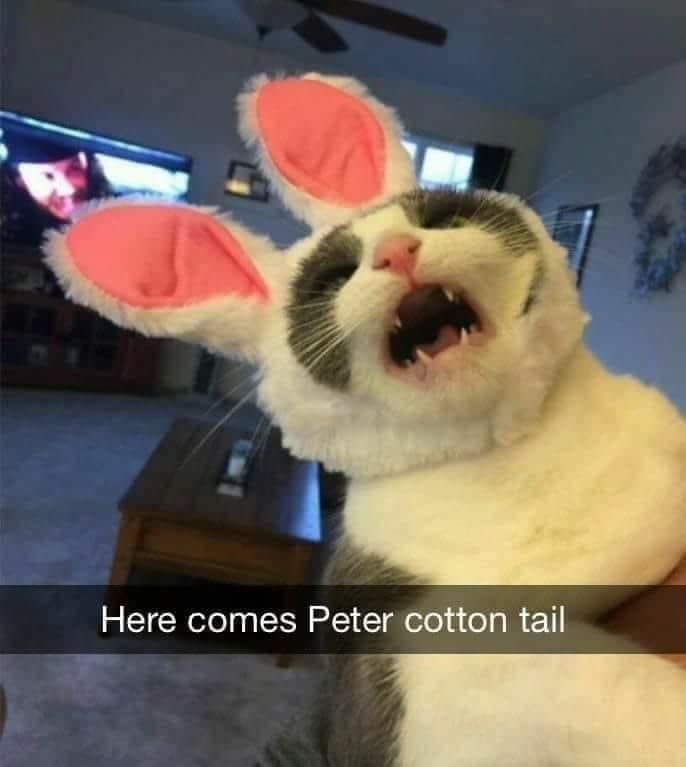 Facial expression - Here comes Peter cotton tail