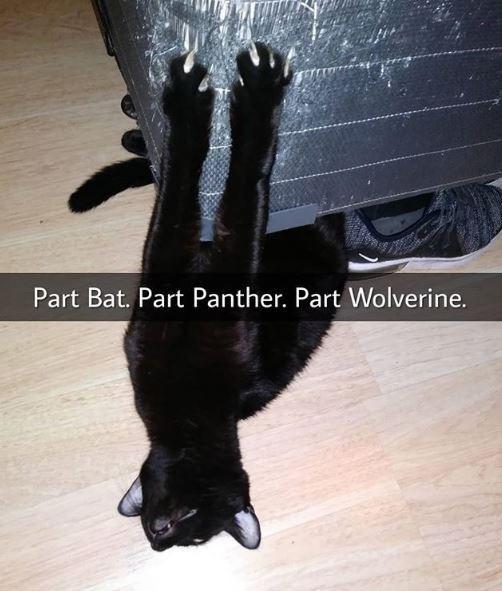 Fur - Part Bat. Part Panther. Part Wolverine.