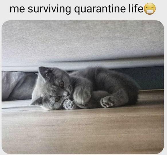Cat - me surviving quarantine life
