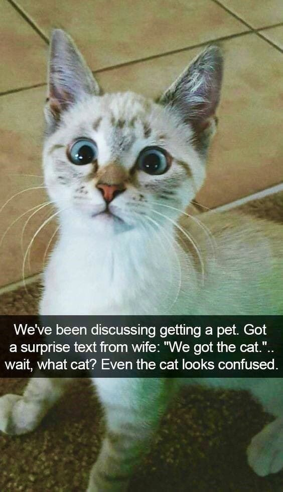 """Cat - We've been discussing getting a pet. Got a surprise text from wife: """"We got the cat."""".. wait, what cat? Even the cat looks confused."""