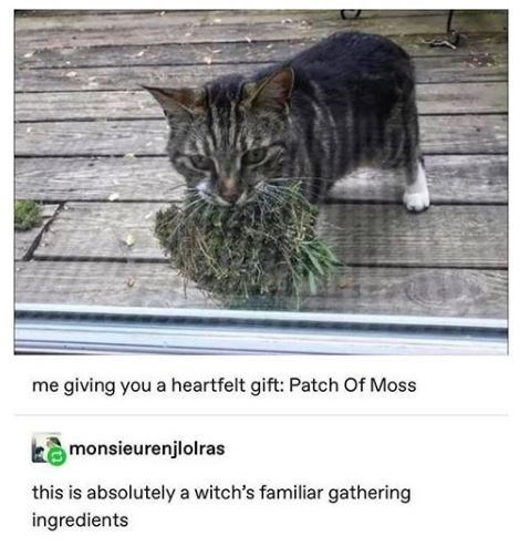Cat - me giving you a heartfelt gift: Patch Of Moss kamonsieurenjlolras this is absolutely a witch's familiar gathering ingredients