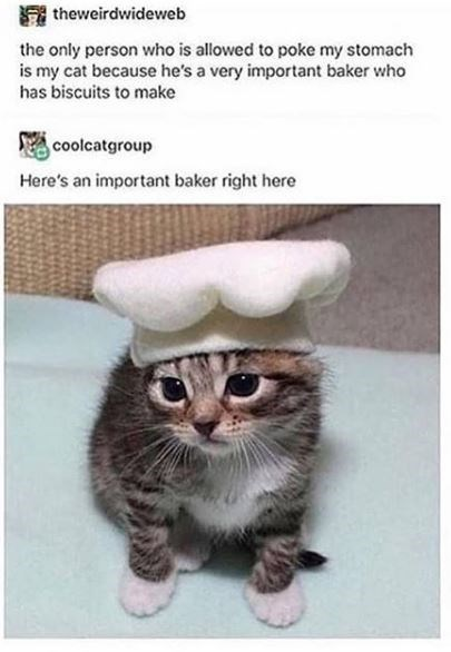 Cat - A theweirdwideweb the only person who is allowed to poke my stomach is my cat because he's a very important baker who has biscuits to make coolcatgroup Here's an important baker right here