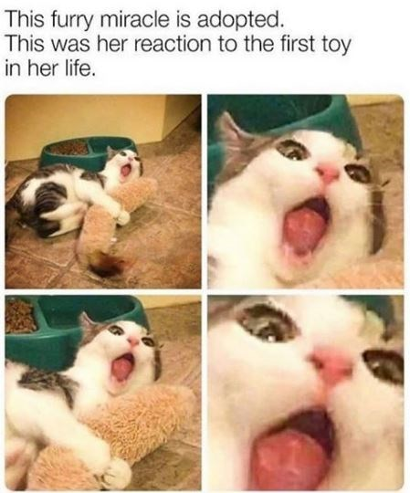 Cat - This furry miracle is adopted. This was her reaction to the first toy in her life.
