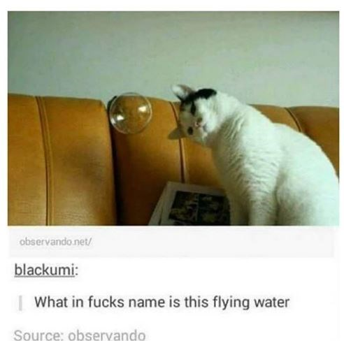 Cat - observando.net/ blackumi: | What in fucks name is this flying water Source: observando