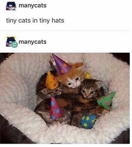 Cat - manycats tiny cats in tiny hats manycats