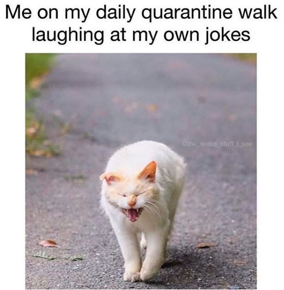 Cat - Me on my daily quarantine walk laughing at my own jokes othe welrd stuff i see
