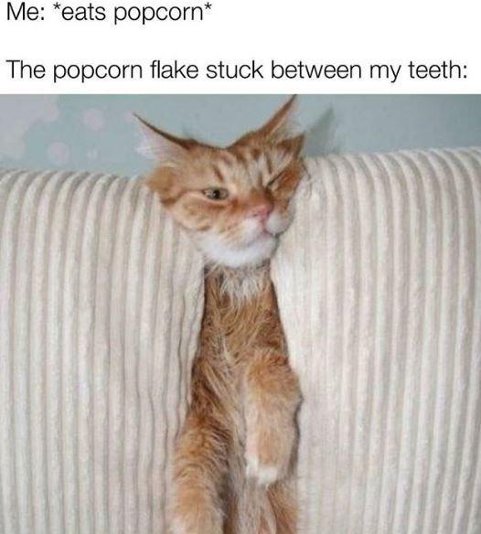 "Cat - Me: *eats popcorn"" The popcorn flake stuck between my teeth:"