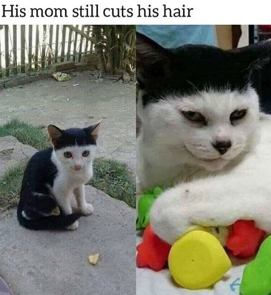 Cat - His mom still cuts his hair