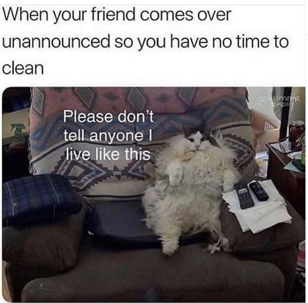 Cat - When your friend comes over unannounced so you have no time to clean ratmeme Please don't tell anyone I live like this