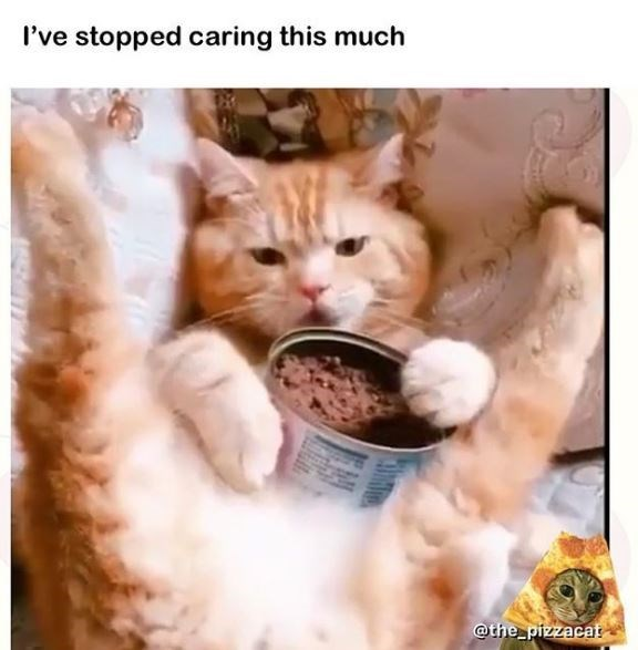 Cat - I've stopped caring this much @the_pizzacat