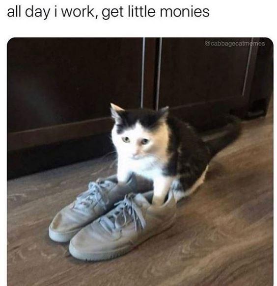 Cat - all day i work, get little monies @cabbagecatmemes