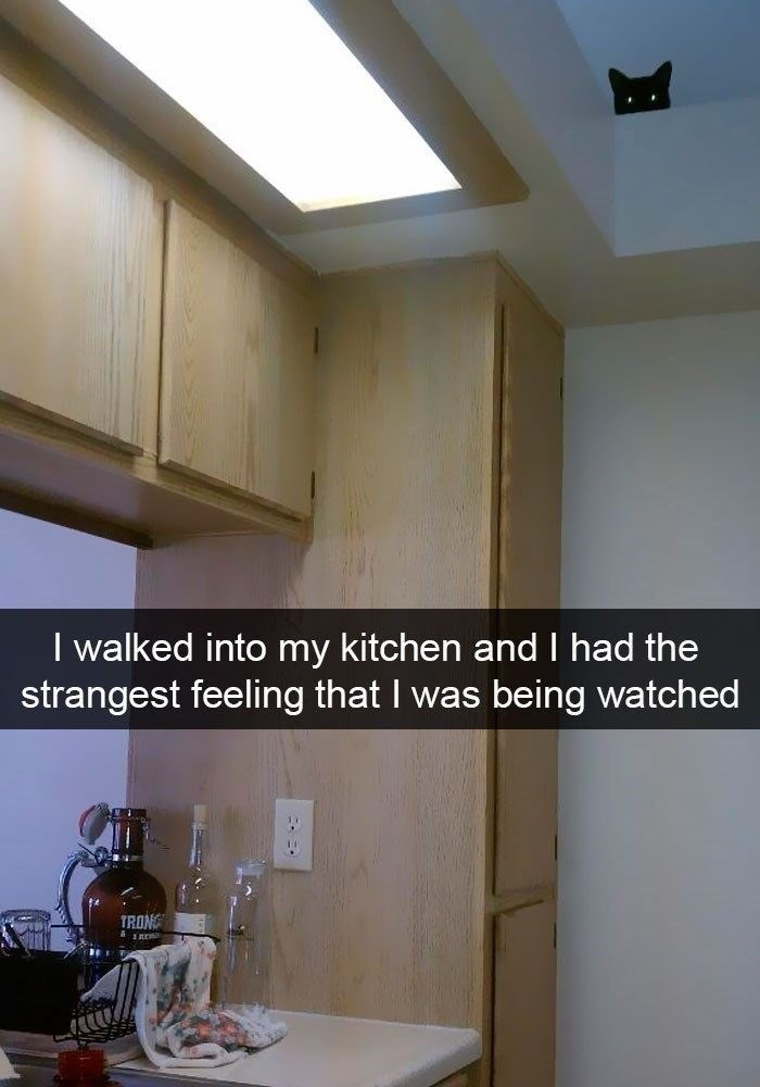 Ceiling - I walked into my kitchen and I had the strangest feeling that I was being watched TRONG