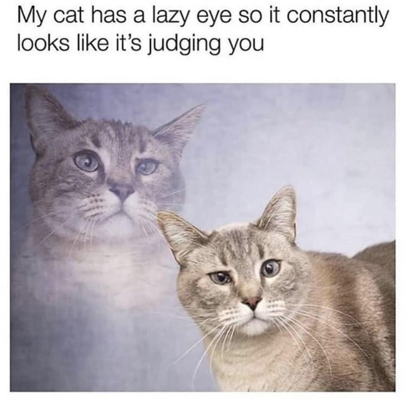 Cat - My cat has a lazy eye so it constantly looks like it's judging you