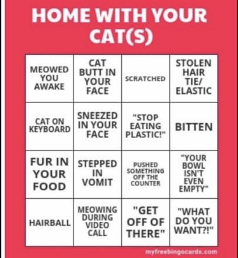 """Text - HOME WITH YOUR CAT(S) CAT MEOWED BUTT IN YOU AWAKE STOLEN HAIR TIE/ ELASTIC SCRATCHED YOUR FACE CAT ON SNEEZED """"STOP KEYBOARD IN YOUR EATING BITTEN FACE PLASTIC!"""" """"YOUR BOWL ISN'T EVEN EMPTY"""" FUR IN STEPPED IN VOMIT PUSHED SOMETHING OFF THE COUNTER YOUR FOOD MEOWING DURING VIDEO CALL """"GET """"WHAT OFF OF DO YOU THERE"""" WANT?!"""" HAIRBALL myfreebingocards.com"""