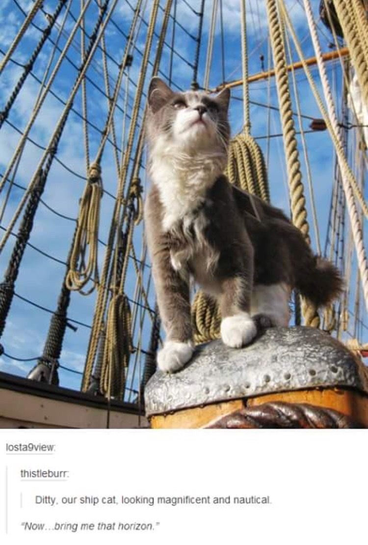 """Cat - losta9view: thistleburr. Ditty, our ship cat, looking magnificent and nautical. """"Now...bring me that horizon."""""""