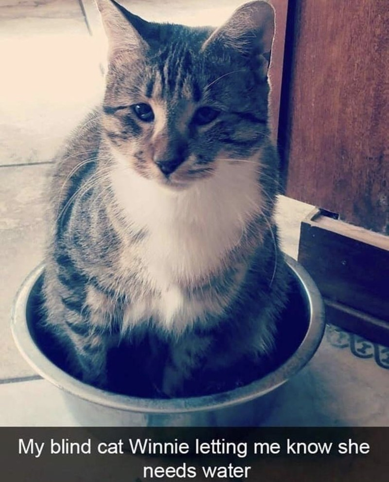 Cat - My blind cat Winnie letting me know she needs water