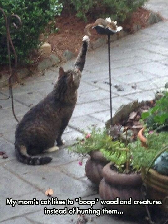 """Cat - My mom's cat likes to """"boop"""" woodland creatures instead of hunting them..."""